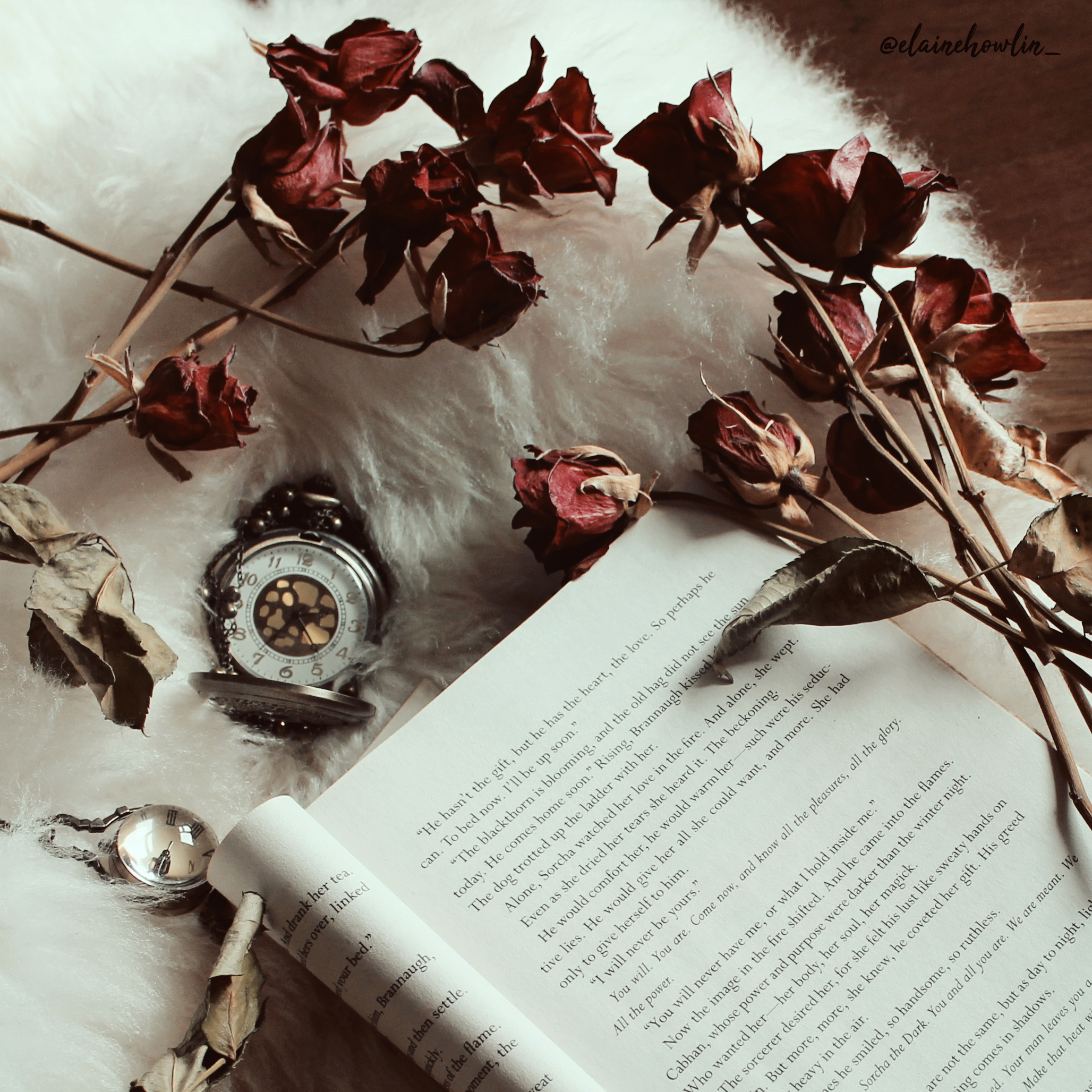 Book, roses and a pocketwatch