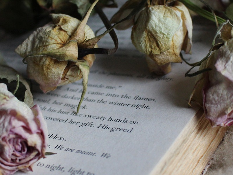 Dried Pink Roses on a book Elaine Howlin